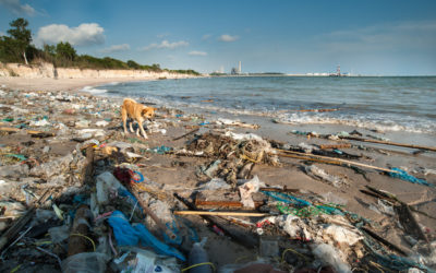New Year brings new controls on plastic waste and more local, national and global action