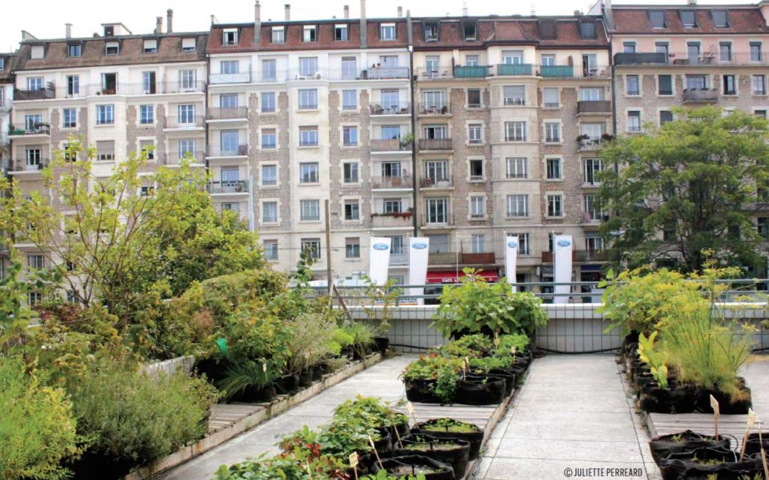 Urban agriculture makes cities like Geneva more sustainable