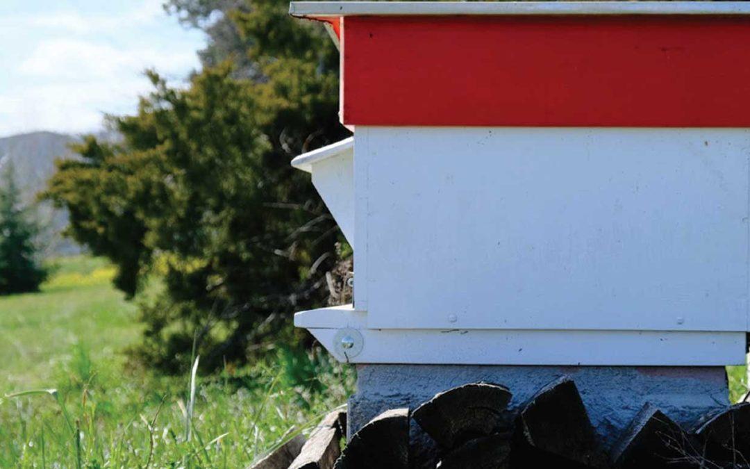 Les abeilles du Palais